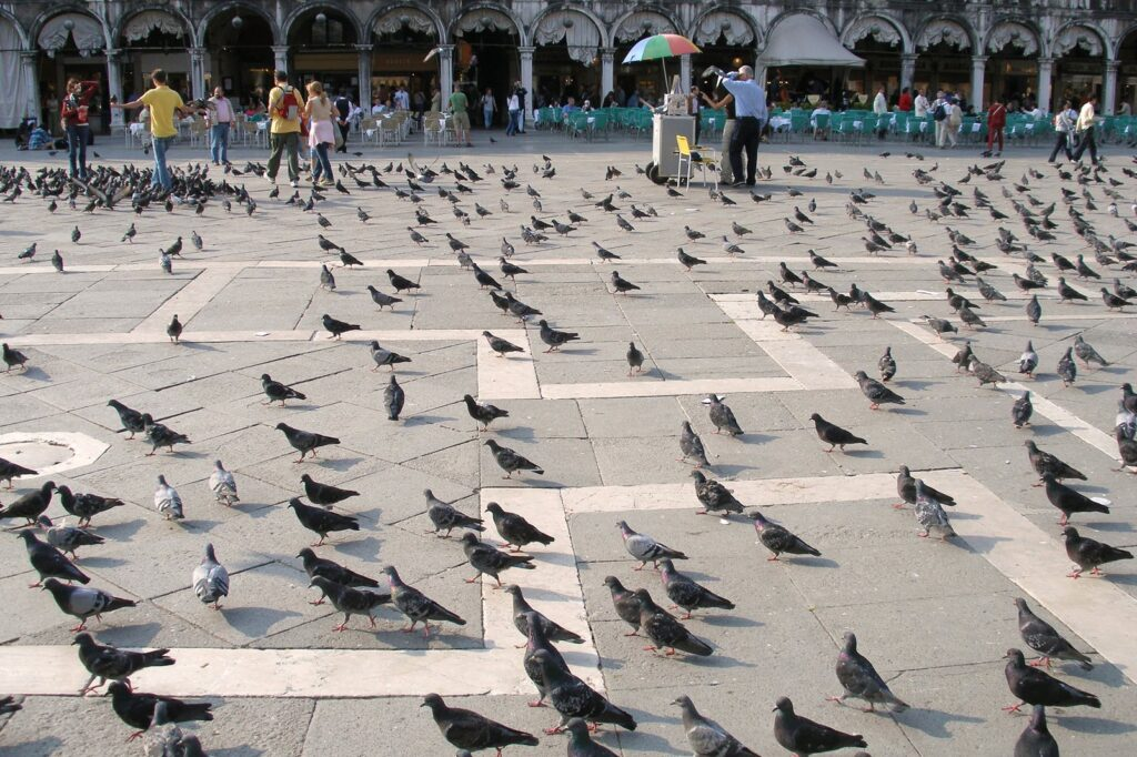 Венеция. Площадь Святого Марка. Голуби